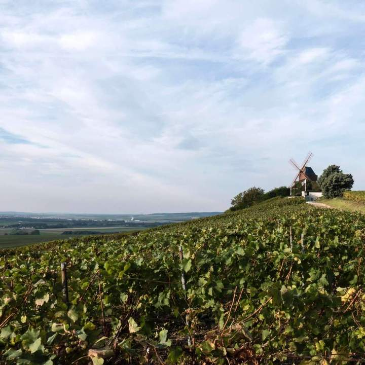 Champagne in World War I: Protecting French Terroir - Saturday